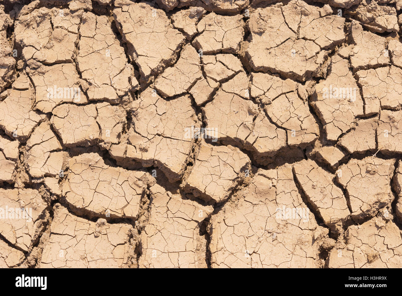 Dry cracking clay soil pattern stock photo royalty free image dry cracking clay soil pattern surface of dry cracking earth for textural background stock photo sciox Images
