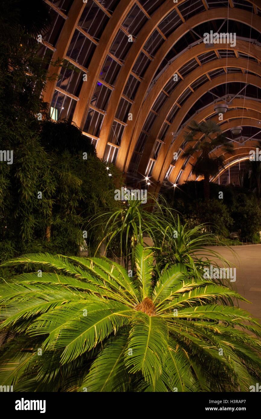 sheffield winter gardens stock photo royalty free image