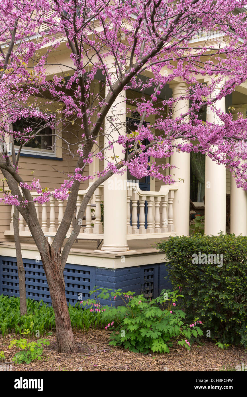 Illinois bureau county princeton - Bureau County Il Redbud Blooming In Front Of Home Built In 1910 In Princeton Illinois