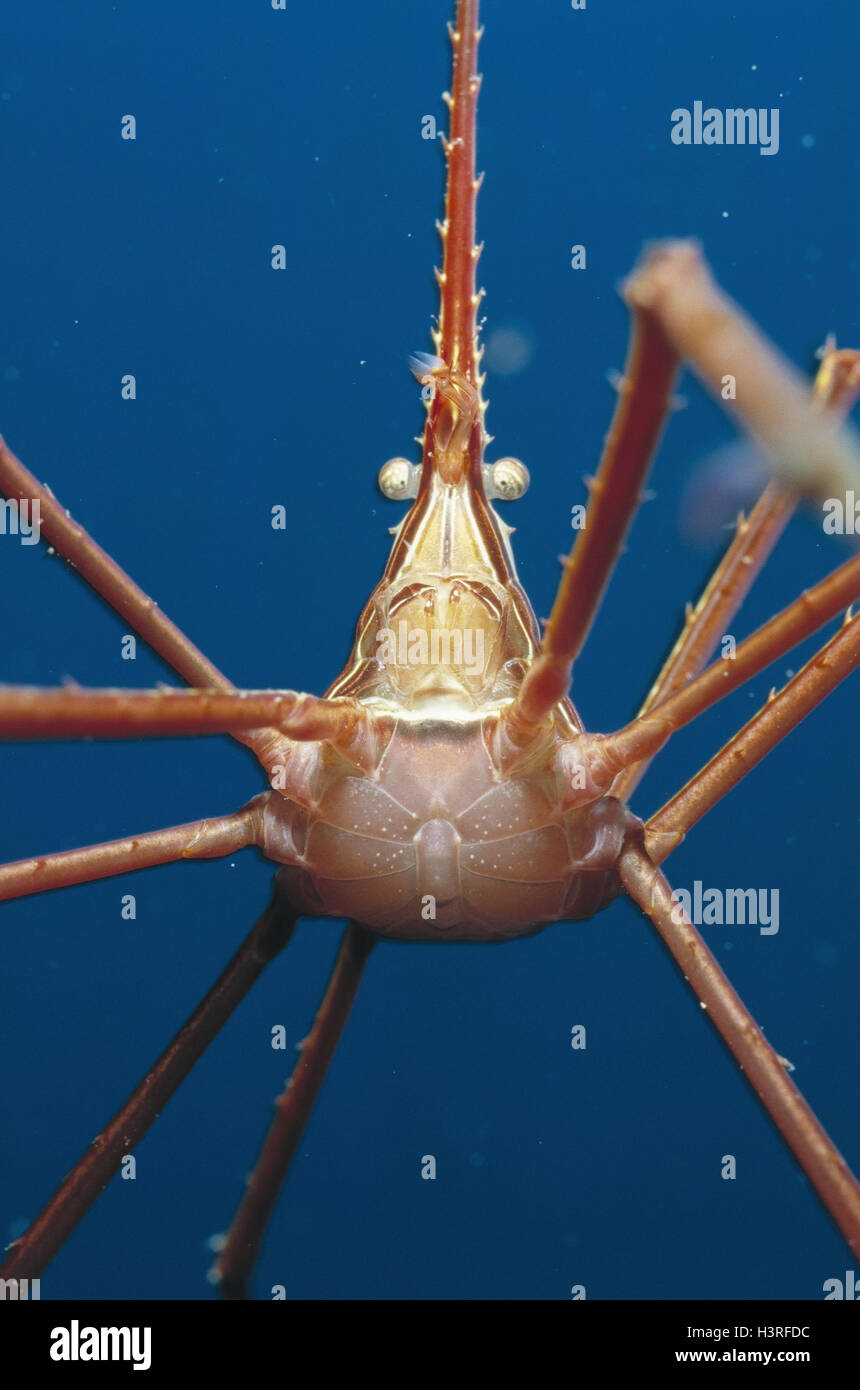 woodlouse spider pantopoda underwater recording the canaries