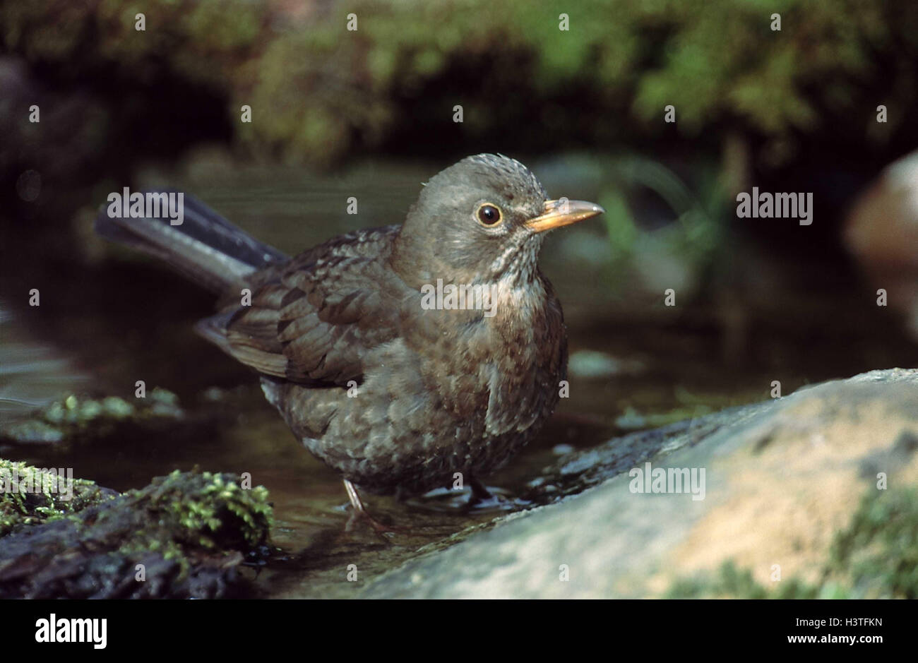 Cormorant, Wing, Freshwater Bird, wild birds, Animals And Pets ...