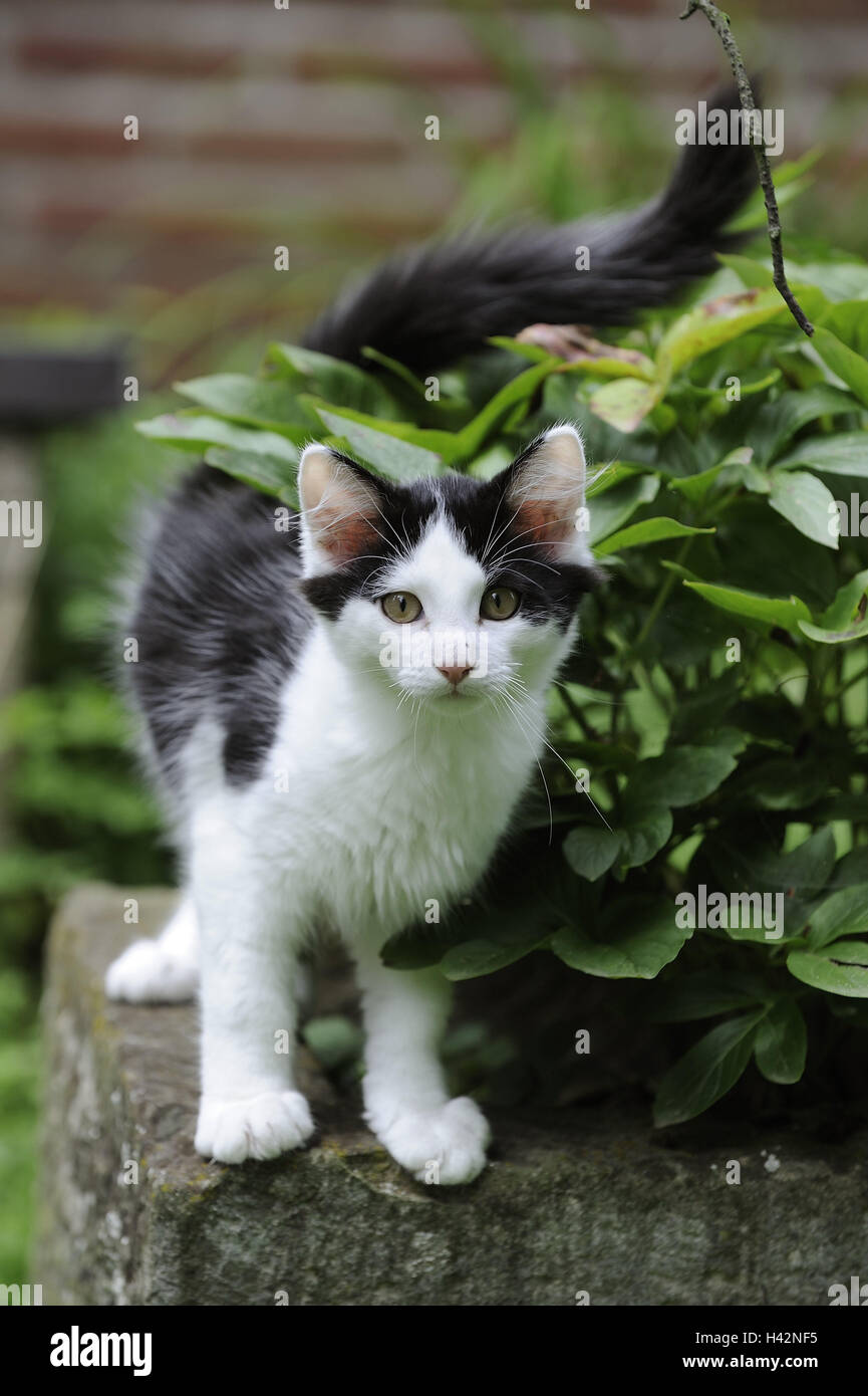 Garden Wall Cat Black and white Animal Mammal House Cat Pet