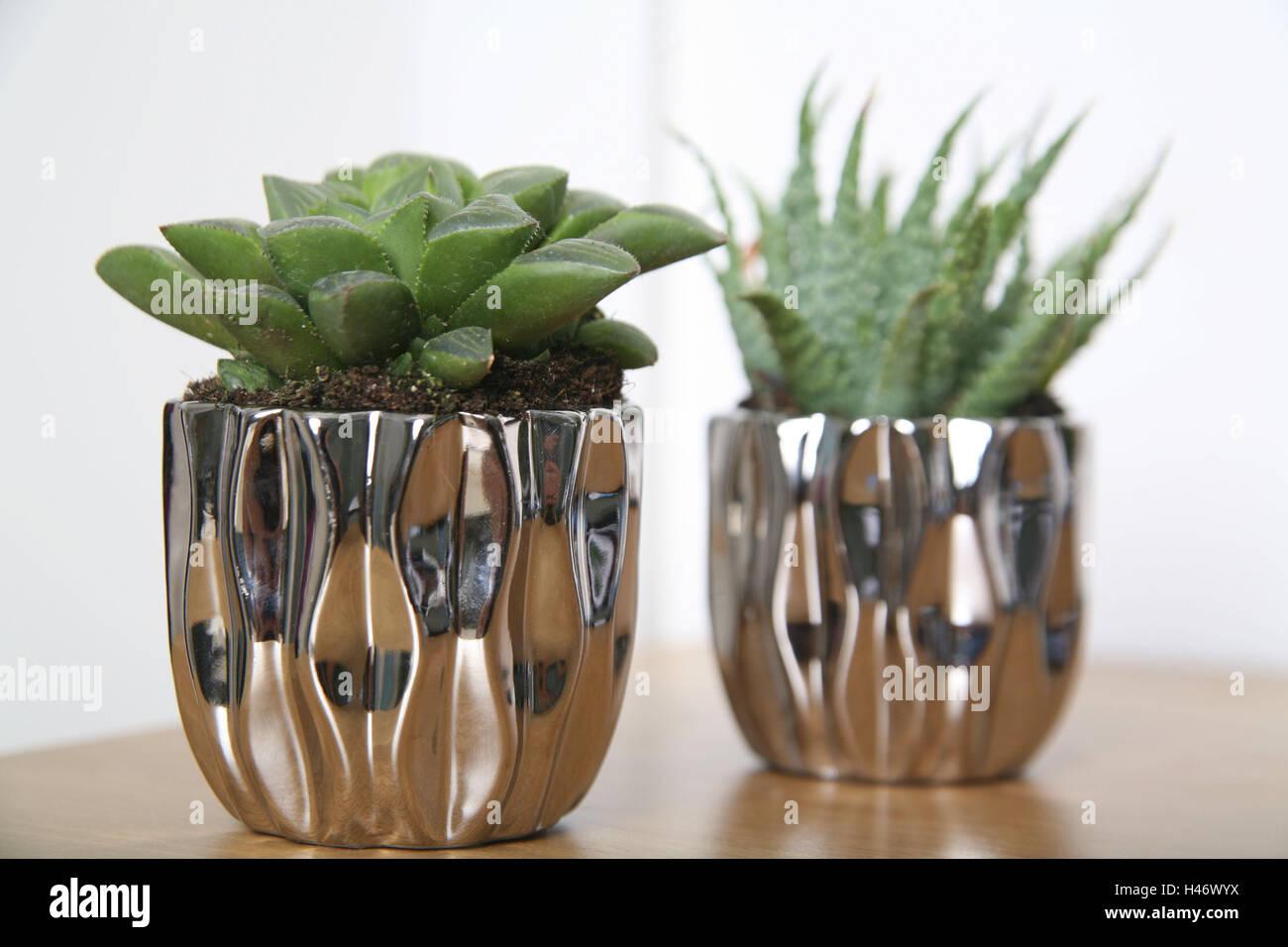 Flowerpot Succulents Indoor Plant Green Pot Holder