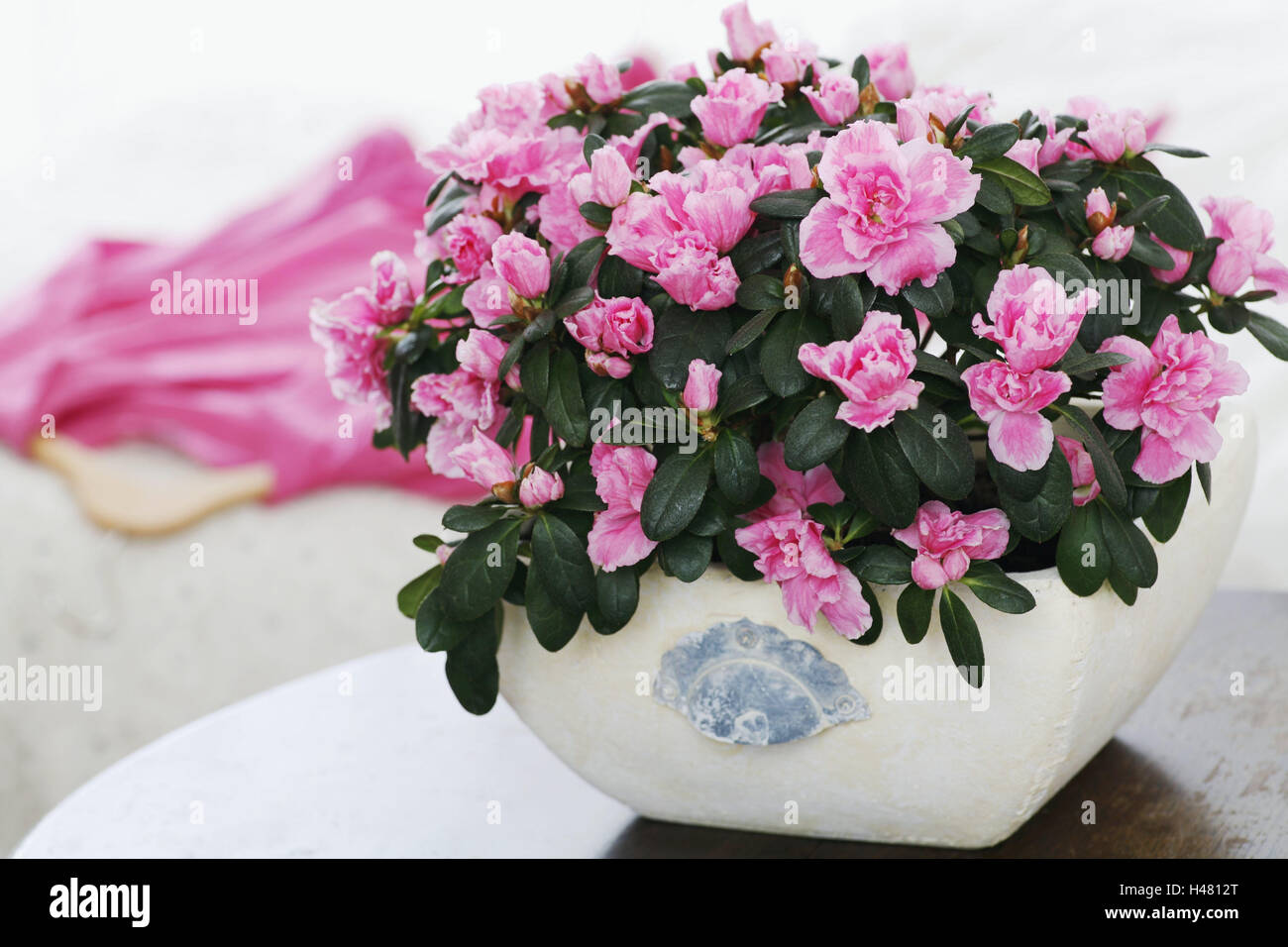 Azalea, blossom, indoor plant, table, rhododendron, pink, pink ...