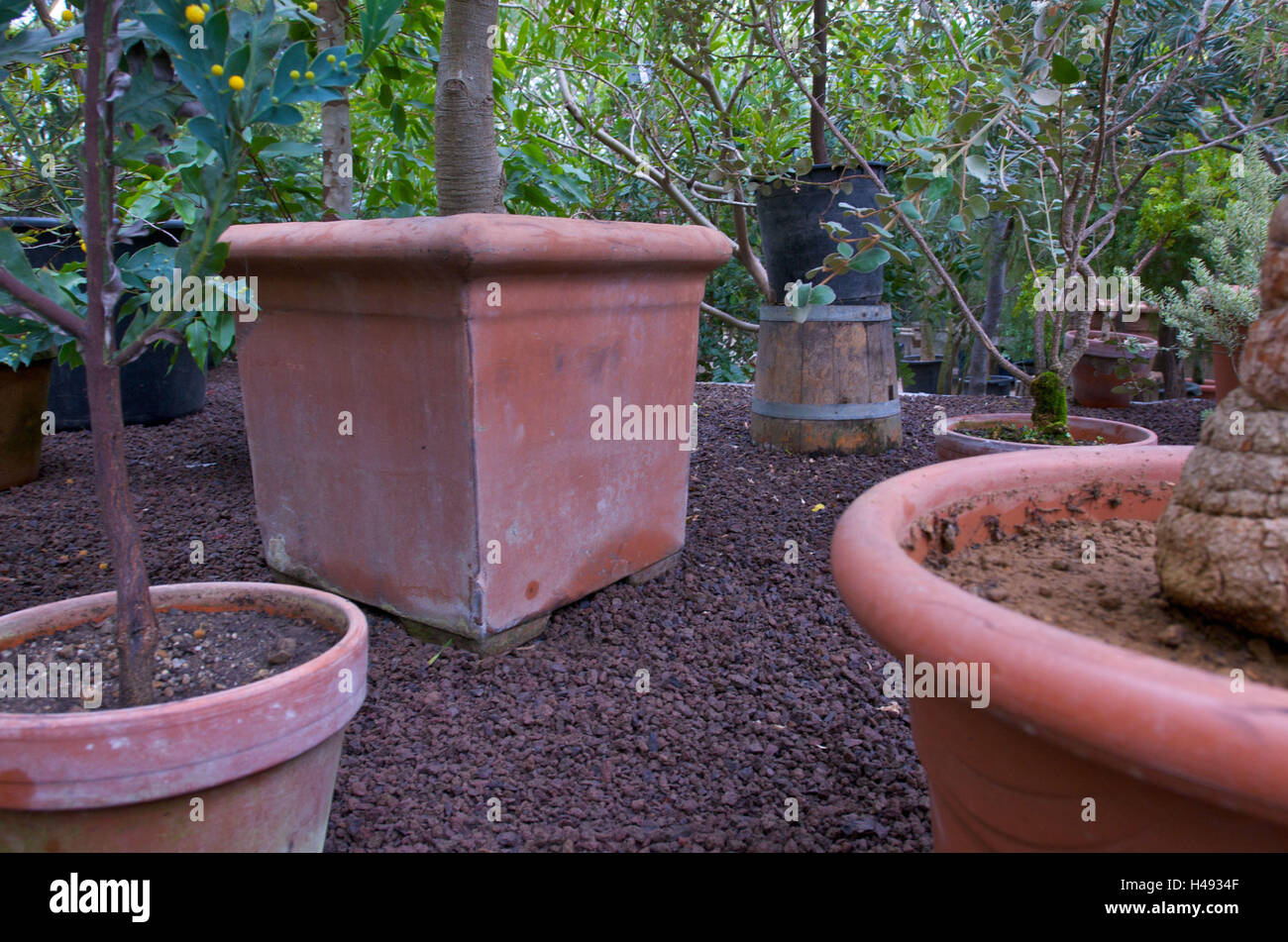 Plants In Tone Pots Stock Photo, Royalty Free Image: 123131247 - Alamy