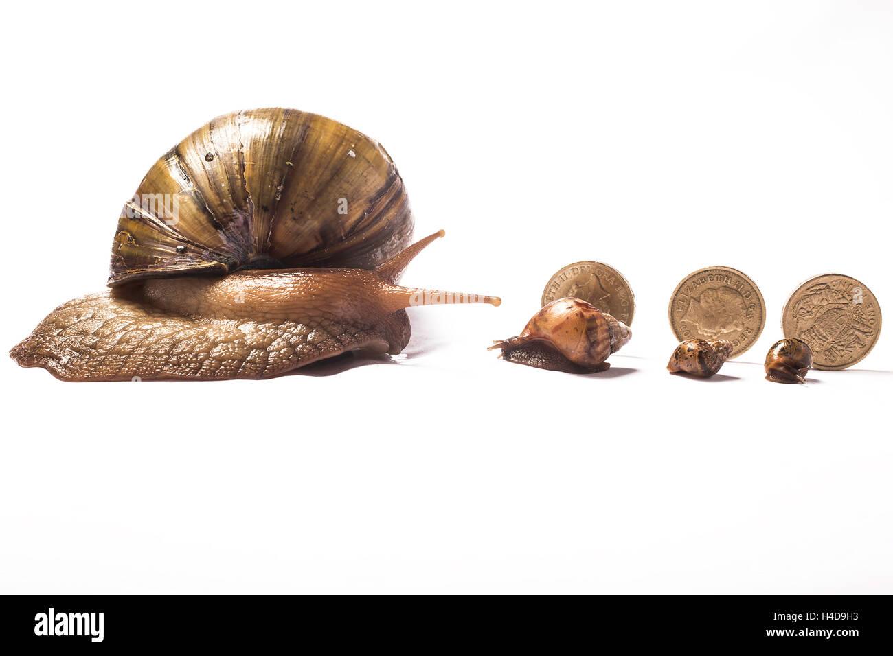 Snail Babies Food