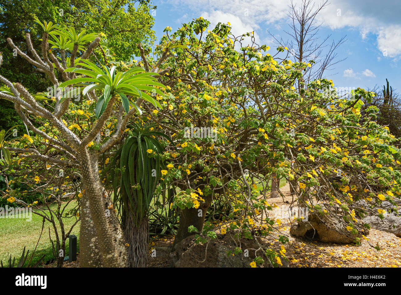 Florida Coral Gables Fairchild Tropical Botanic Garden