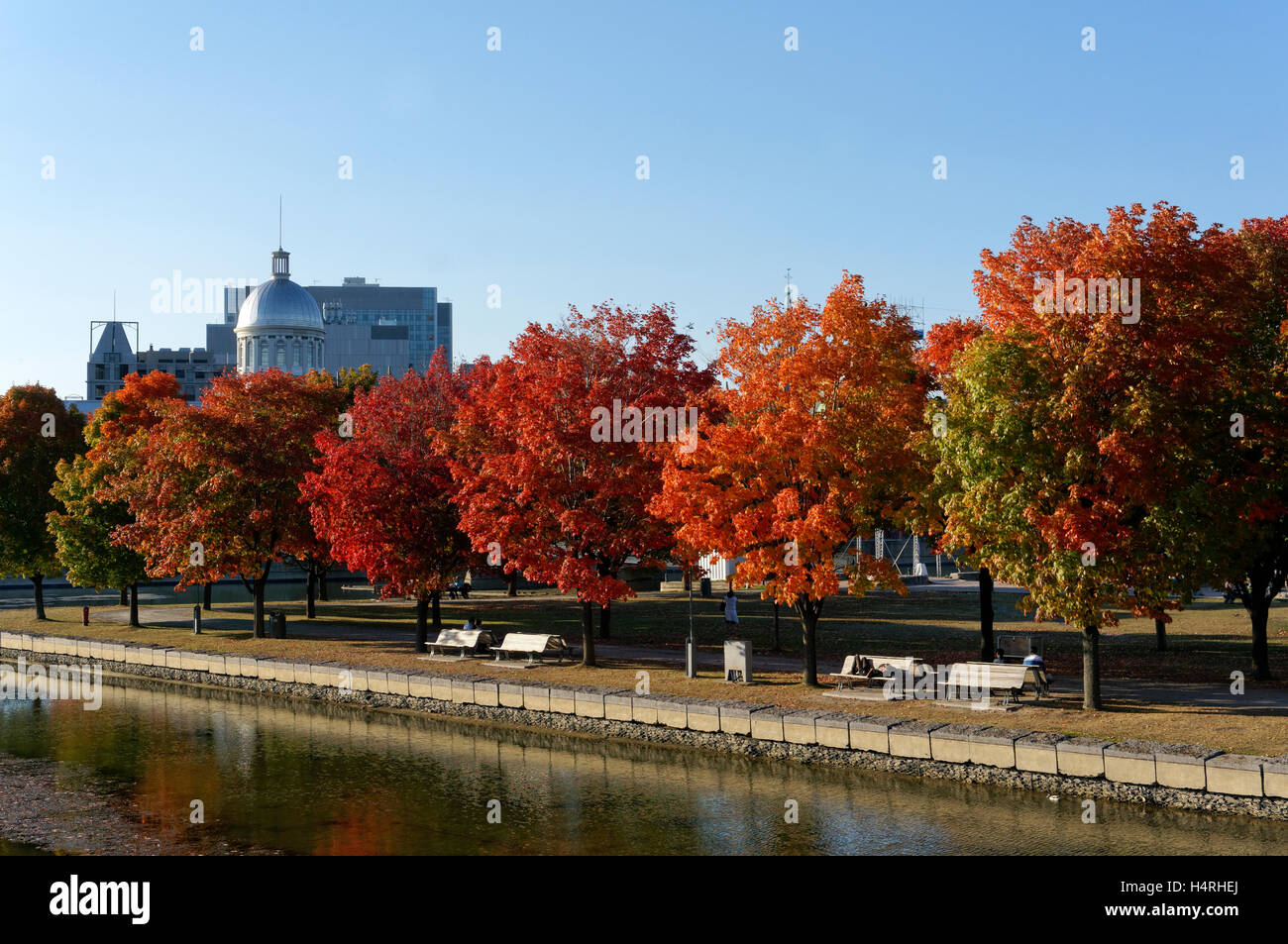 red-maple-trees-in-the-parc-du-bassin-bo