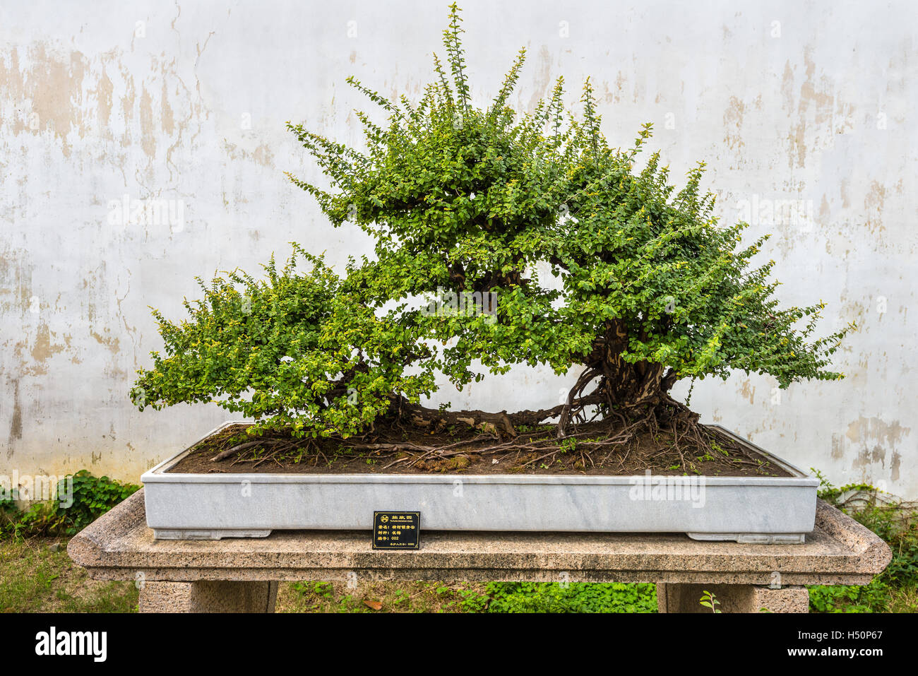 Small Trees In Pot Stock Photos Amp Small Trees In Pot Stock Images
