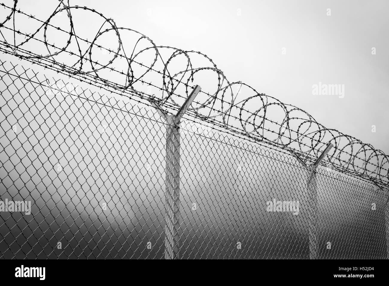 Barbed wire - restricted area, black and white Stock Photo, Royalty ...
