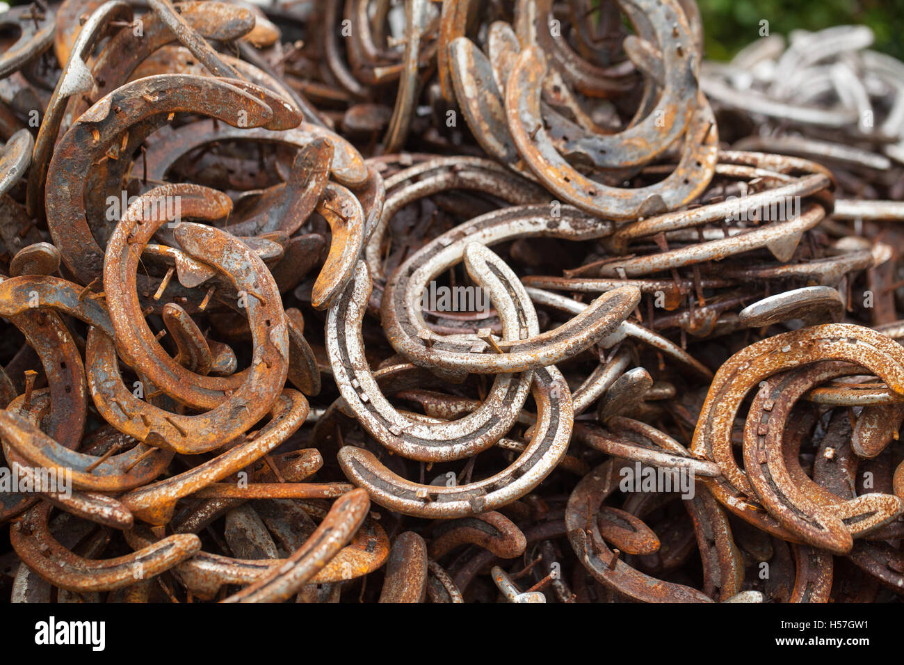 Horseshoes pile of used worn metal horseshoes outside a for Where to buy used horseshoes