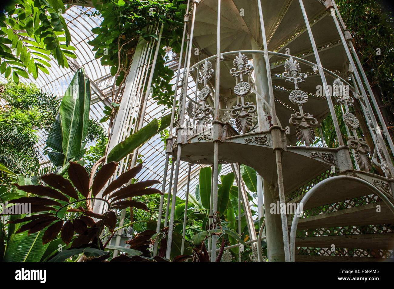 kew gardens. palm house, large greenhouse, interior view, tropical