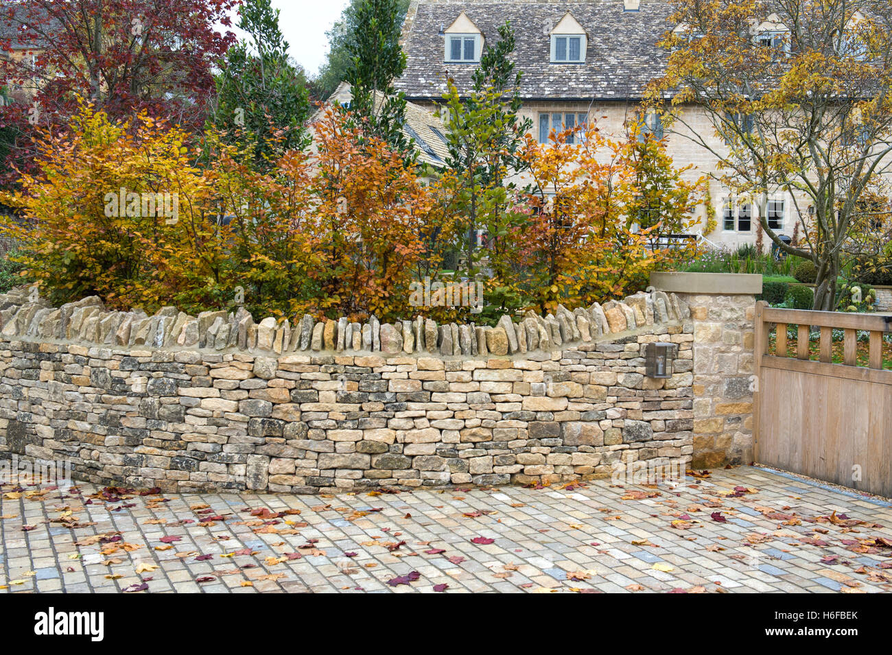 Stock Photo   Young Autumn Beech Trees And Dry Stone Wall In Blockley,  Cotswolds, Gloucestershire, England