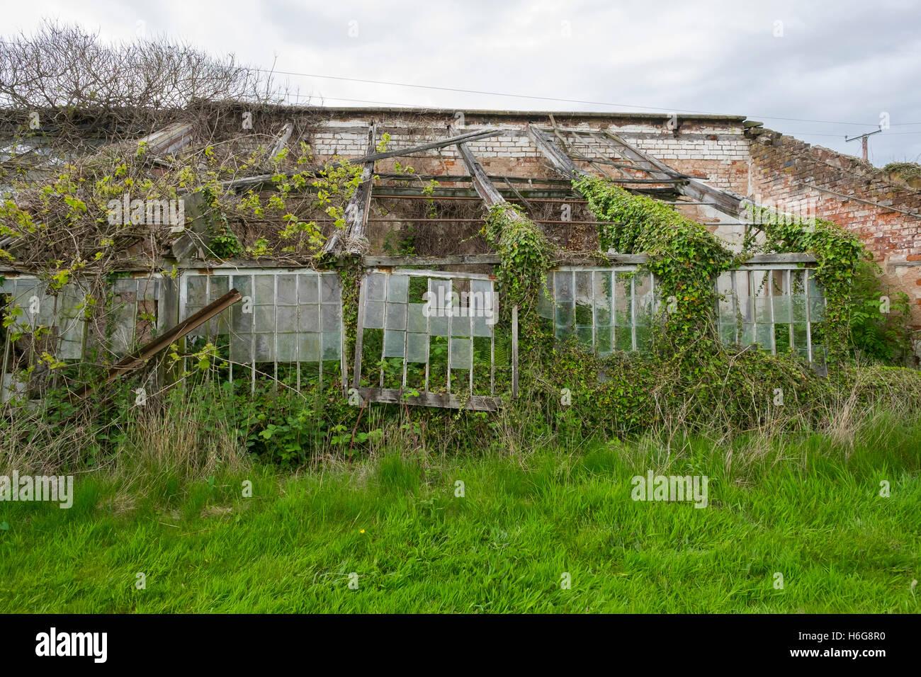 The greenhouse stanley - Derelict Greenhouse At Stanley Hall Bridgnorth Shropshire Uk