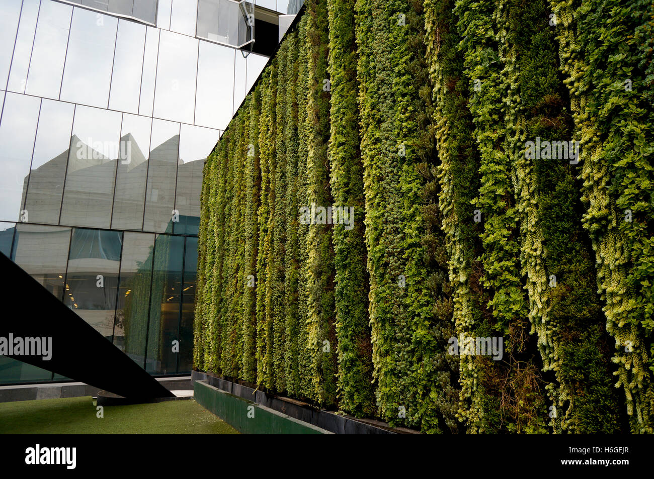 Plant wall on office building in Mexico City, Mexico Stock Photo ...