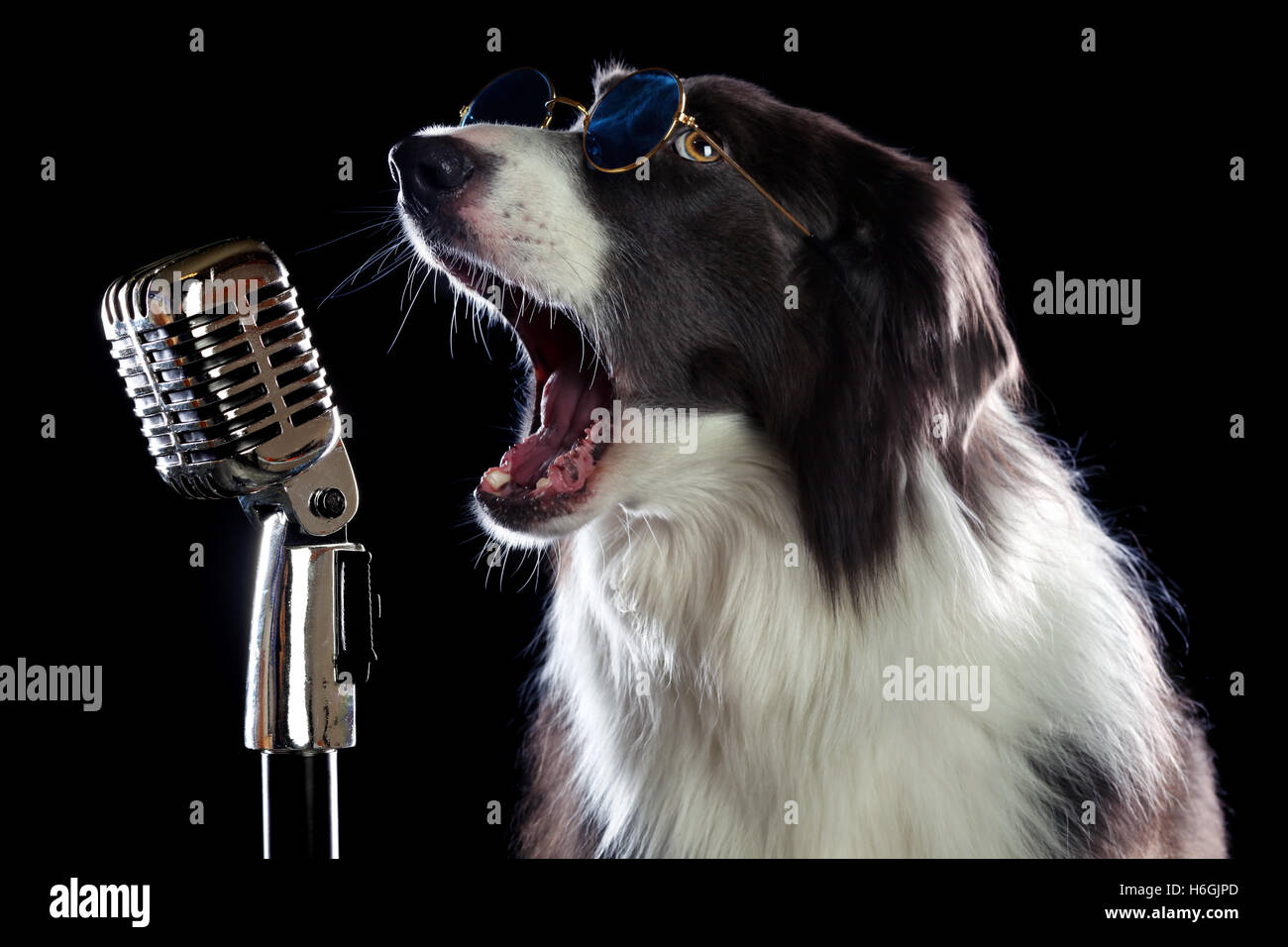 Singing animals