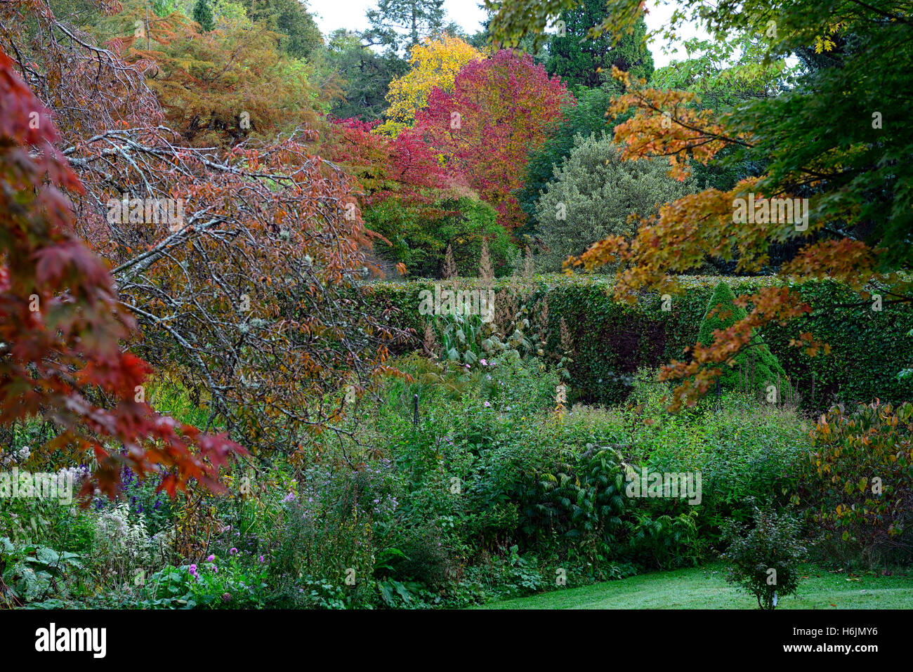 acer tree trees red leaves foliage autumn autumnal colour colors ...