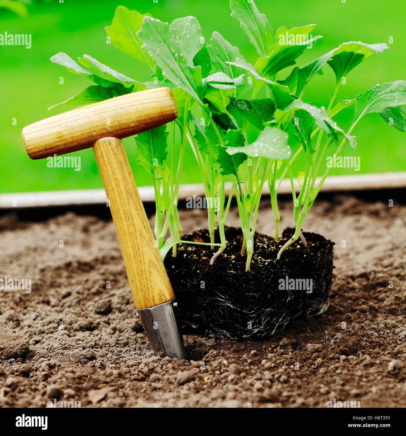 tool garden ground soil earth humus new summer summerly small tiny