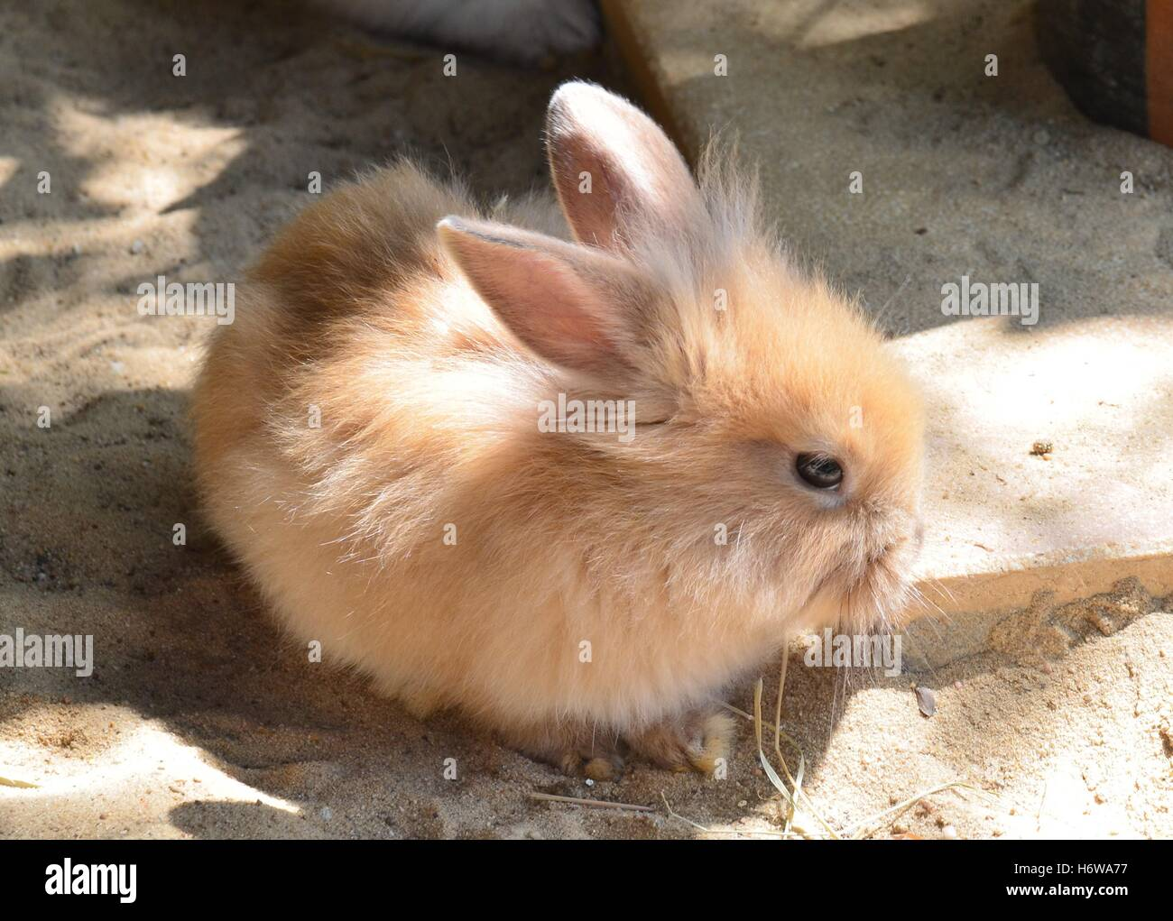 baby rabbits for free. stock photo - animal mammal rabbit hare cub baby rabbits bunny nature shine shines bright lucent light serene luminous pet animals for free