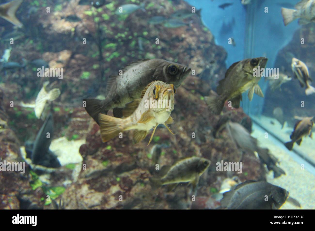 Fish aquarium japan - Fish In The Osaka Aquarium Kaiyukan Japan