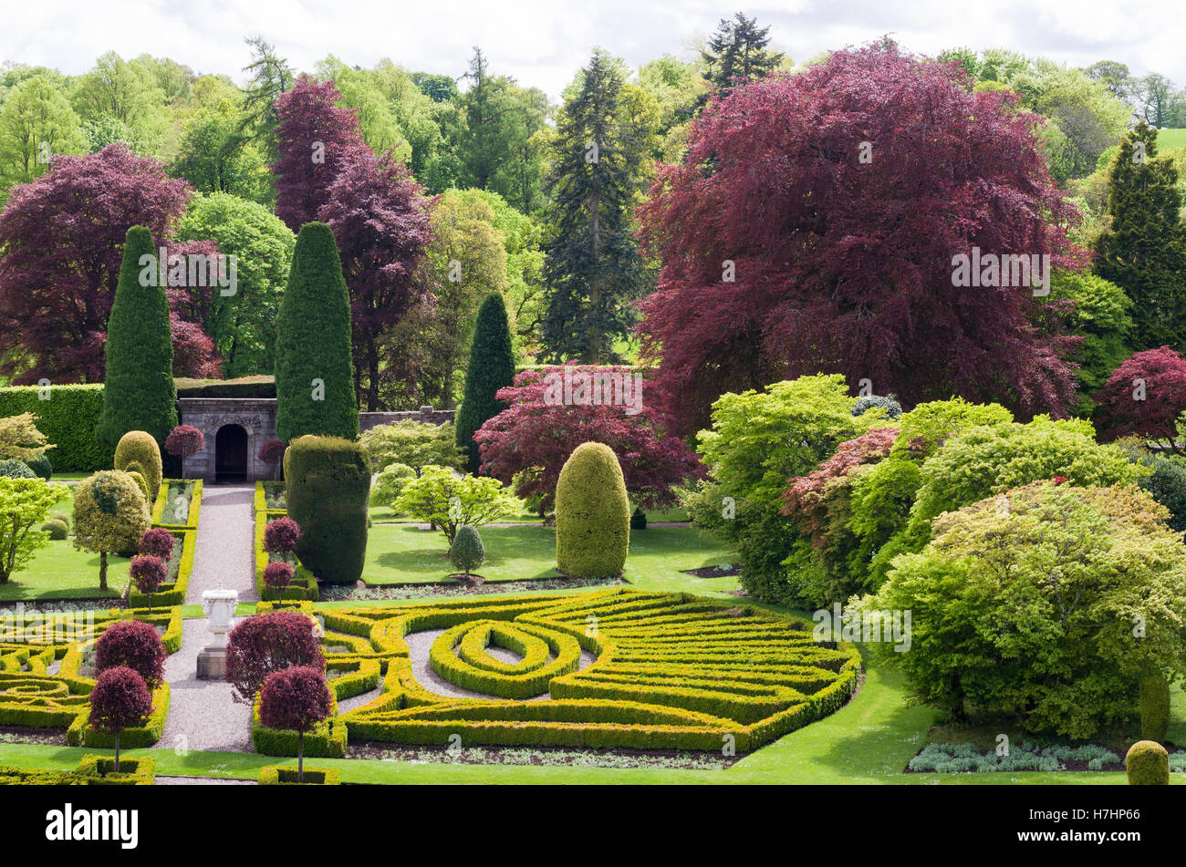 Marvelous Drummond Castle And Gardens In Crieff Perthshire Scotland Uk Stock  With Engaging The Copper Beech Tree Planted By Queen Victoria In Gardens Of Drummond  Castle Gardens Muthill With Appealing Small Garden Plans Also Forbury Gardens Day Nursery In Addition Garden Truck And Garden Jerusalem As Well As Metal Flowers For Garden Additionally How To Keep Cats Out Your Garden From Alamycom With   Engaging Drummond Castle And Gardens In Crieff Perthshire Scotland Uk Stock  With Appealing The Copper Beech Tree Planted By Queen Victoria In Gardens Of Drummond  Castle Gardens Muthill And Marvelous Small Garden Plans Also Forbury Gardens Day Nursery In Addition Garden Truck From Alamycom