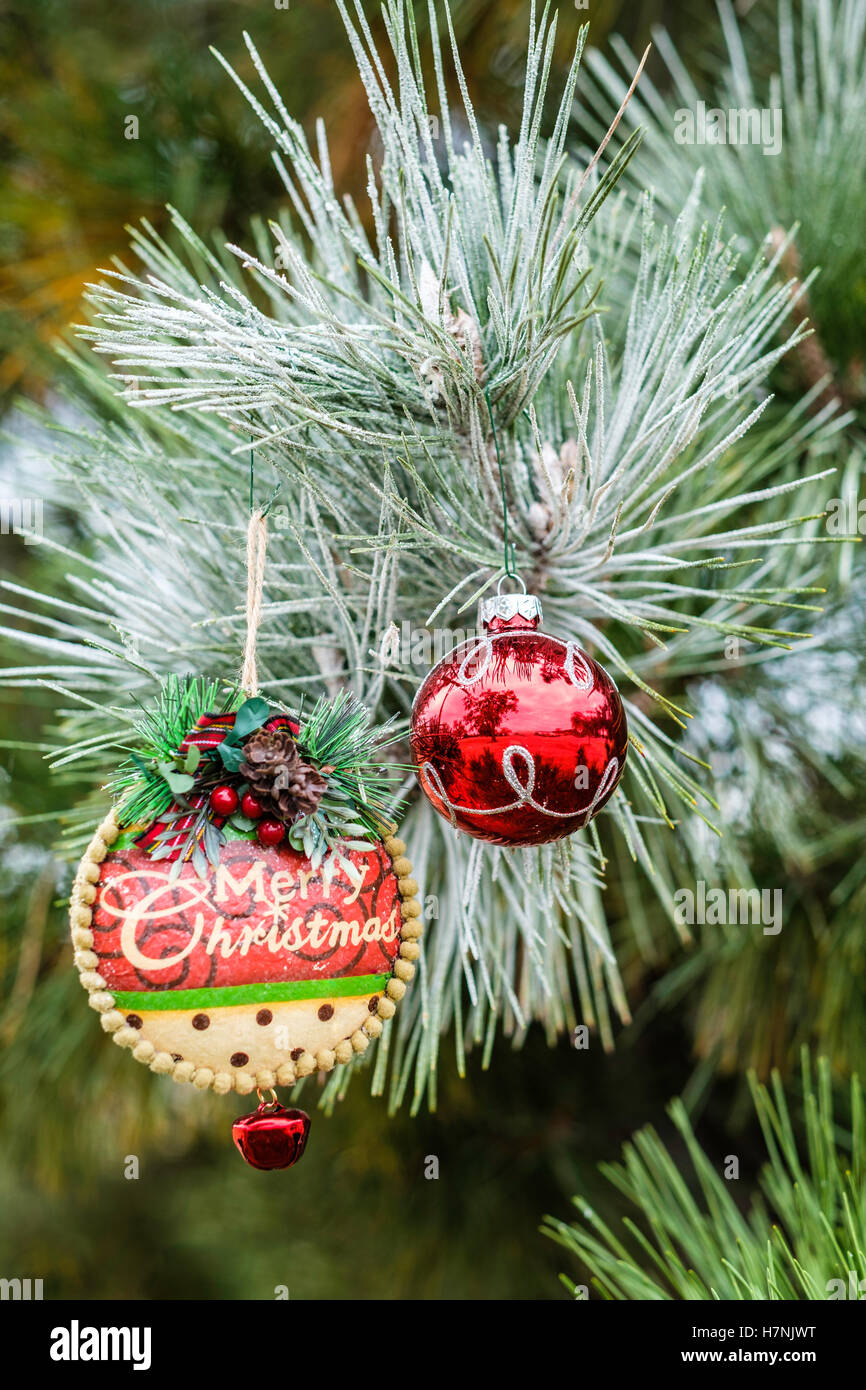Frosted christmas ornaments - Stock Photo Two Christmas Ornaments Hanging In A Frosted Pine Tree Closeup