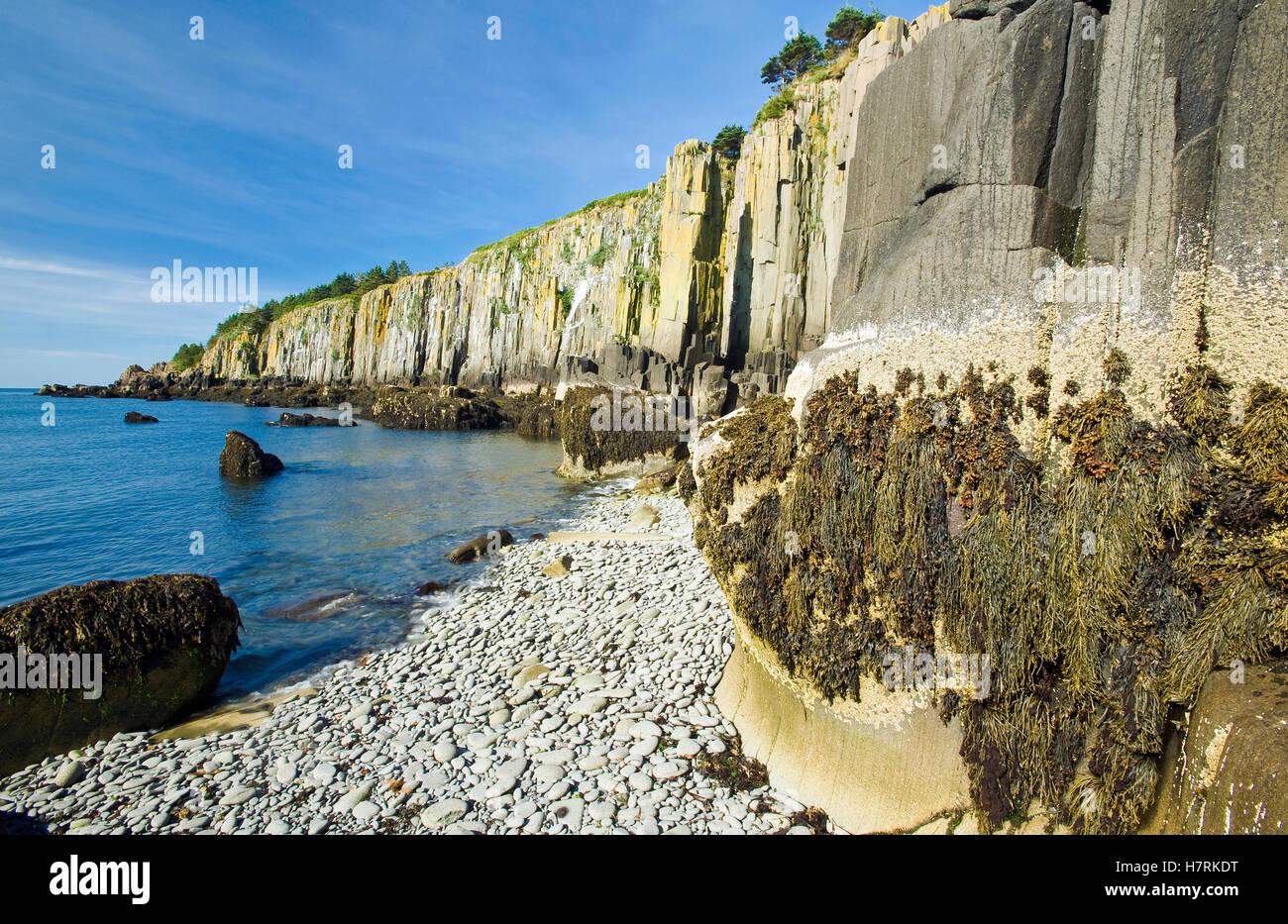 basalt rock cliffs  bay of fundy  brier island  nova