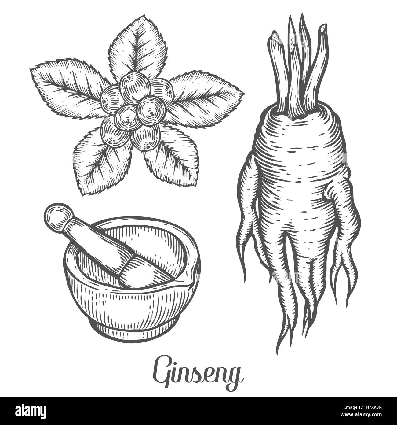 Ginseng root, leaf, berry, plant with mortar and pestle. Black ... for Mortar And Pestle Drawing  56mzq