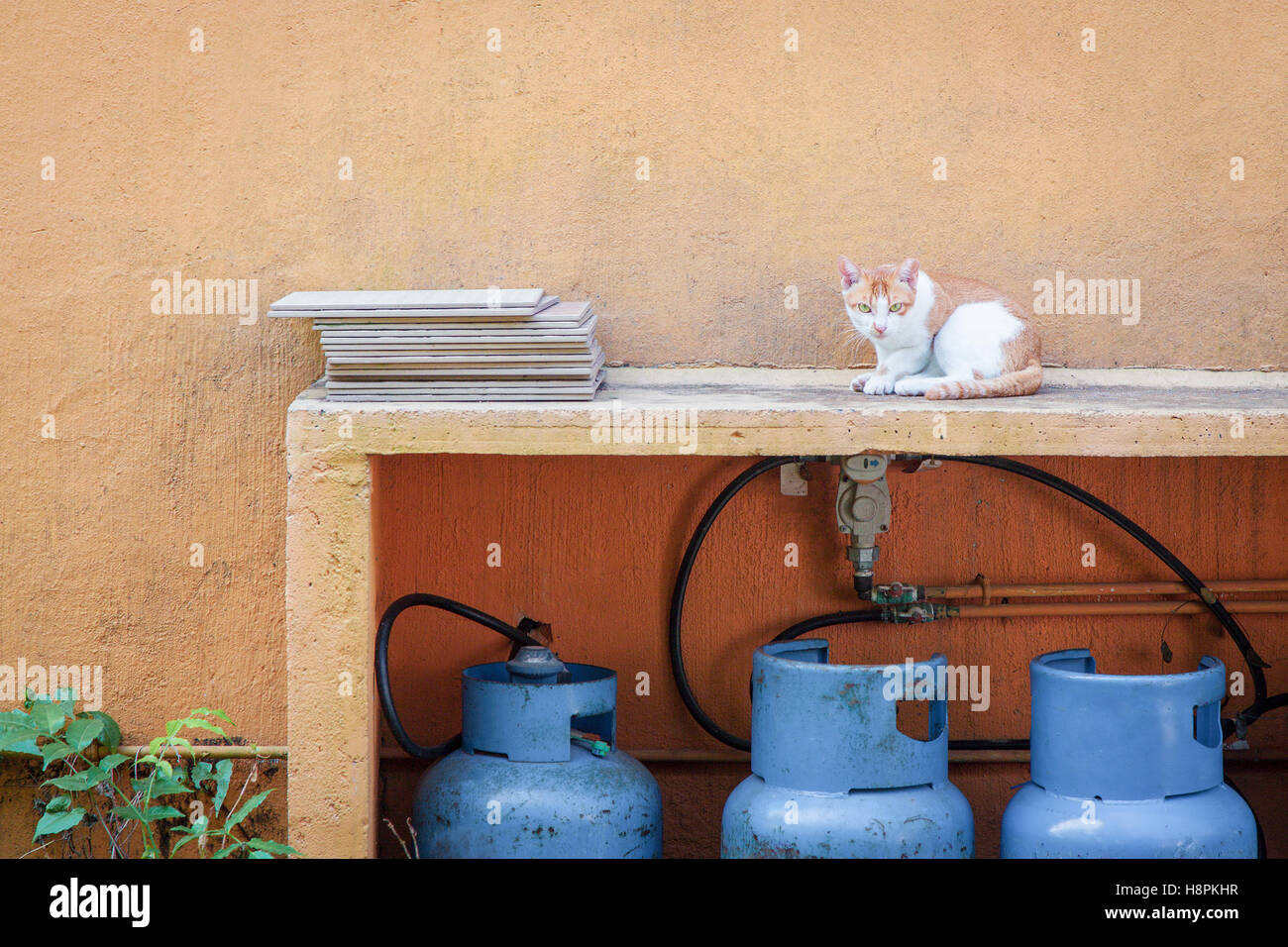 cat in backyard next to a orange wall stock photo royalty free