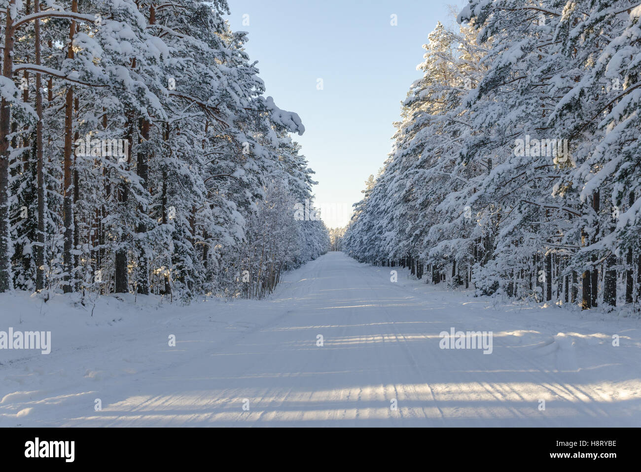 Snow covered winter road in lahemaa national park estonia