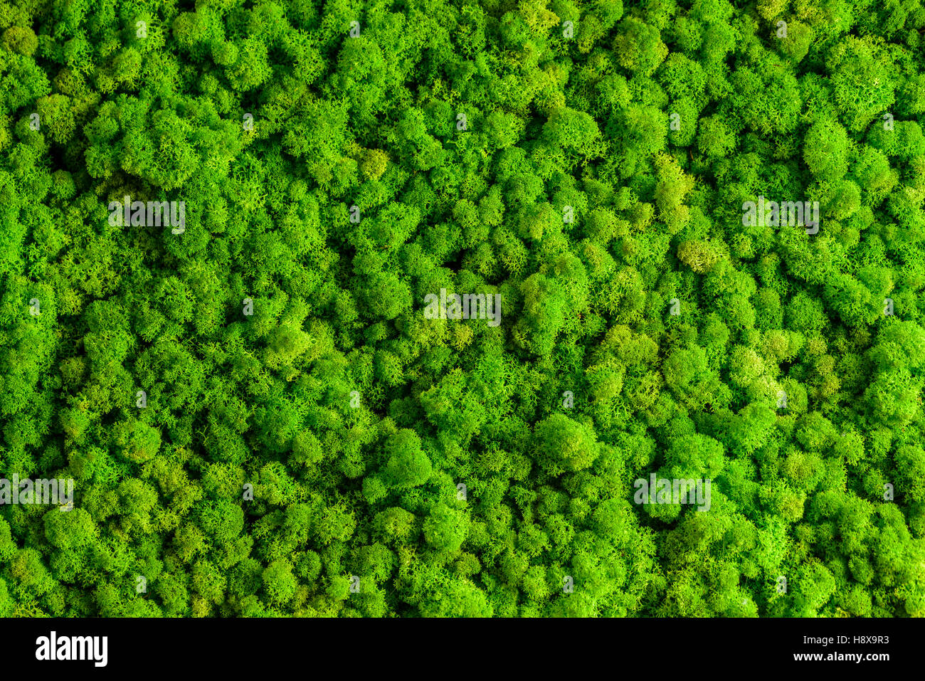 reindeer moss wall green wall decoration made of reindeer lichen stock photo 125968279 alamy. Black Bedroom Furniture Sets. Home Design Ideas