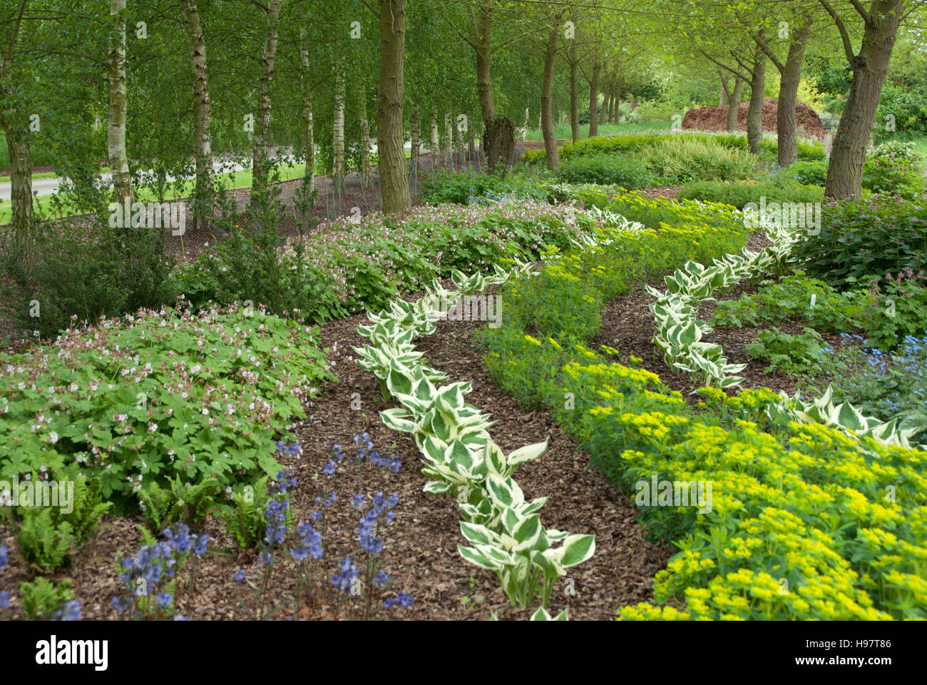 shade loving plants stock photos  shade loving plants stock, Beautiful flower