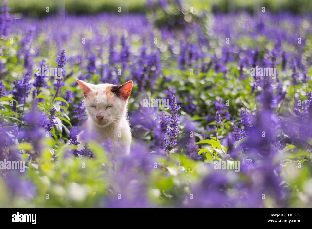 lavender cat - photo #23