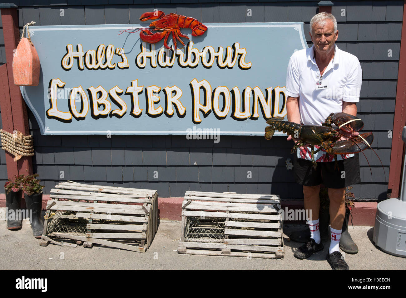 A lobster at Halls Harbour Lobster Pound in Nova Scotia, Canada Stock Photo: 126323141 - Alamy