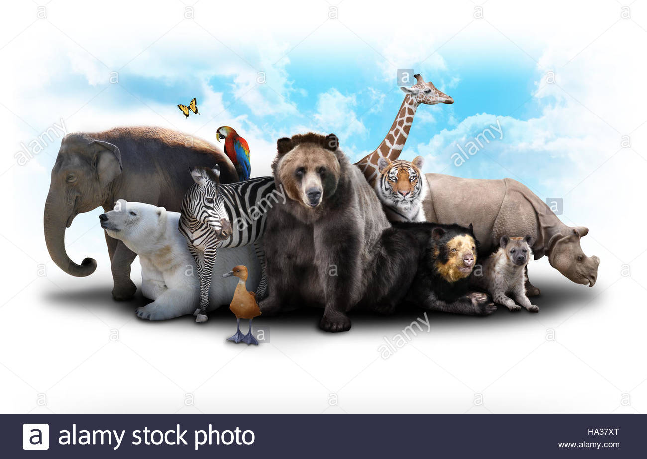 Group of wild animals together - photo#50