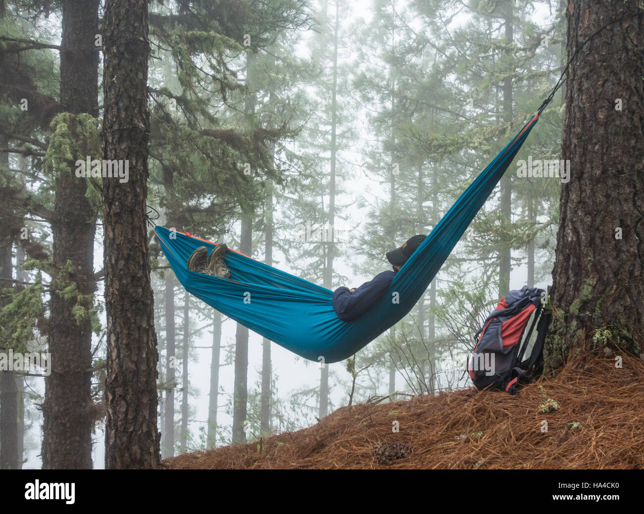 female hiker relaxing in hammock in pine forest  possible uses  mature backpacker retirement adventure gap year female hiker relaxing in hammock in pine forest  possible uses      rh   alamy