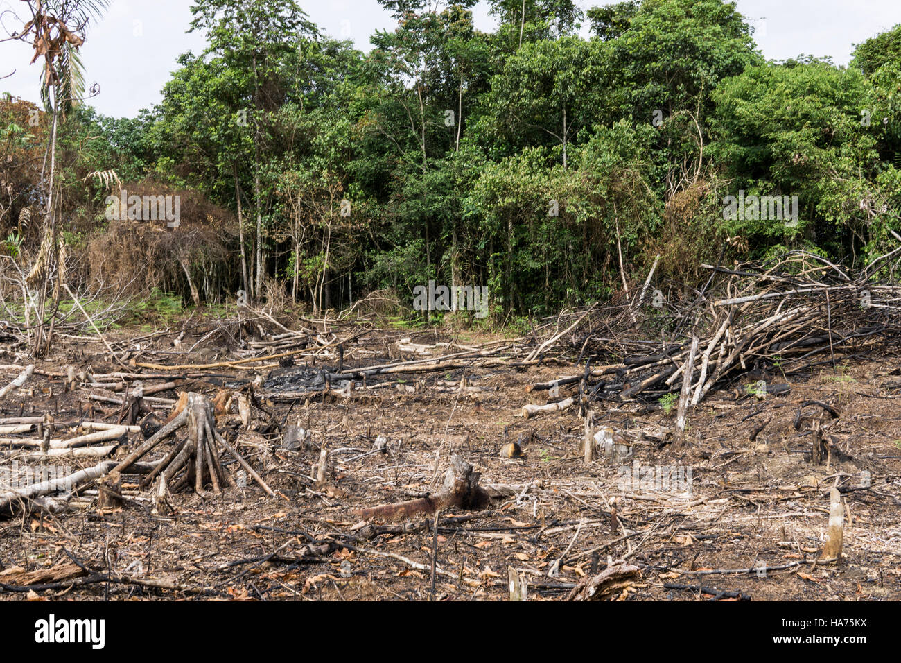 Deforestation in the Amazon jungle.Huanuco department