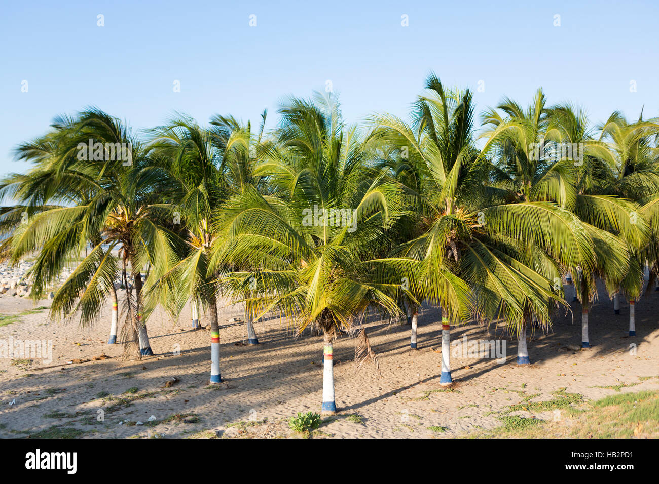 Colored palm trees and beach in Colombia Stock Photo: 127295309 - Alamy