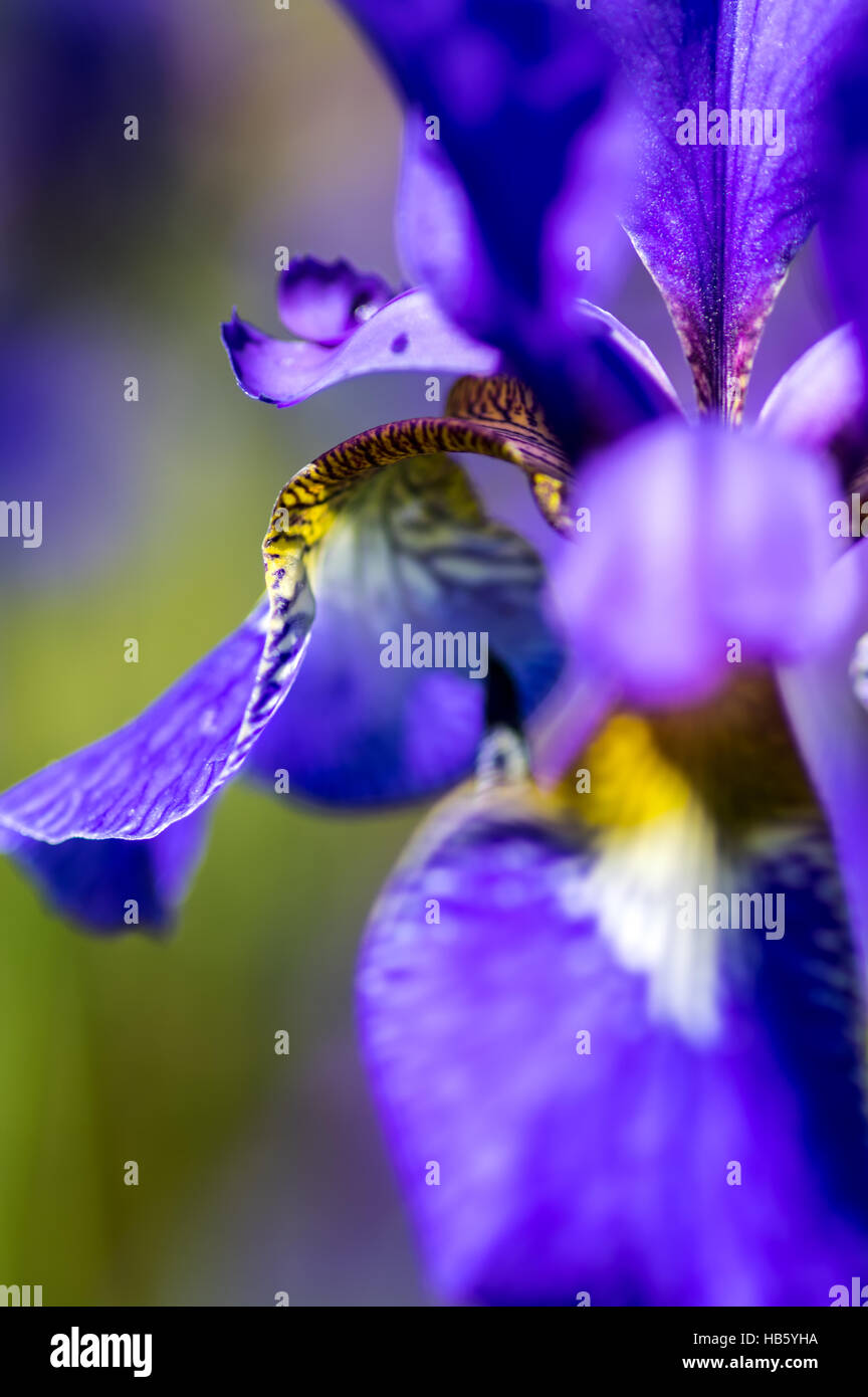 Blue lily photography utah