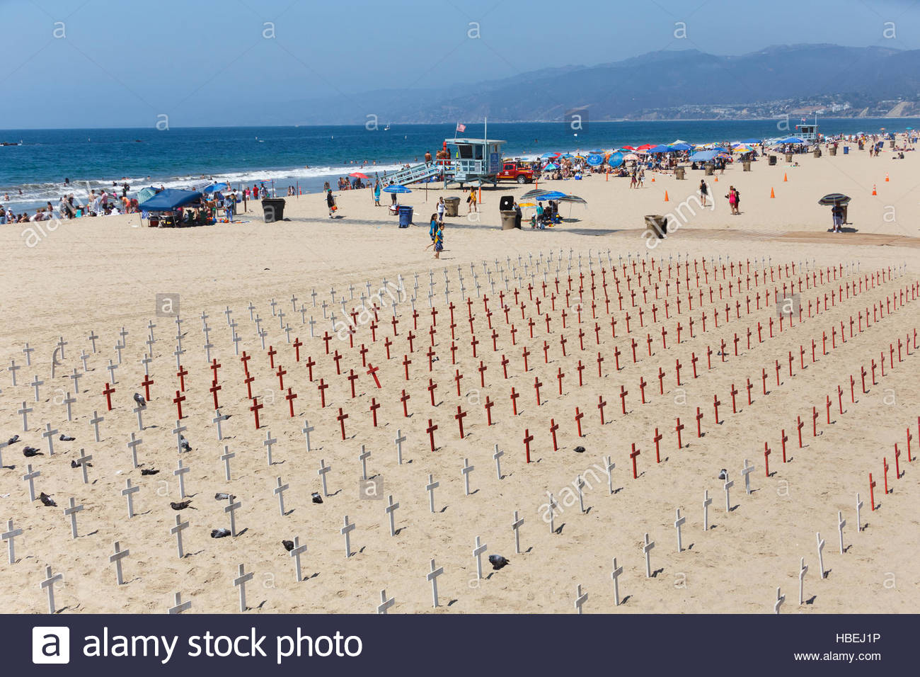 volunteers set out hundreds of crosses and faux coffins on the