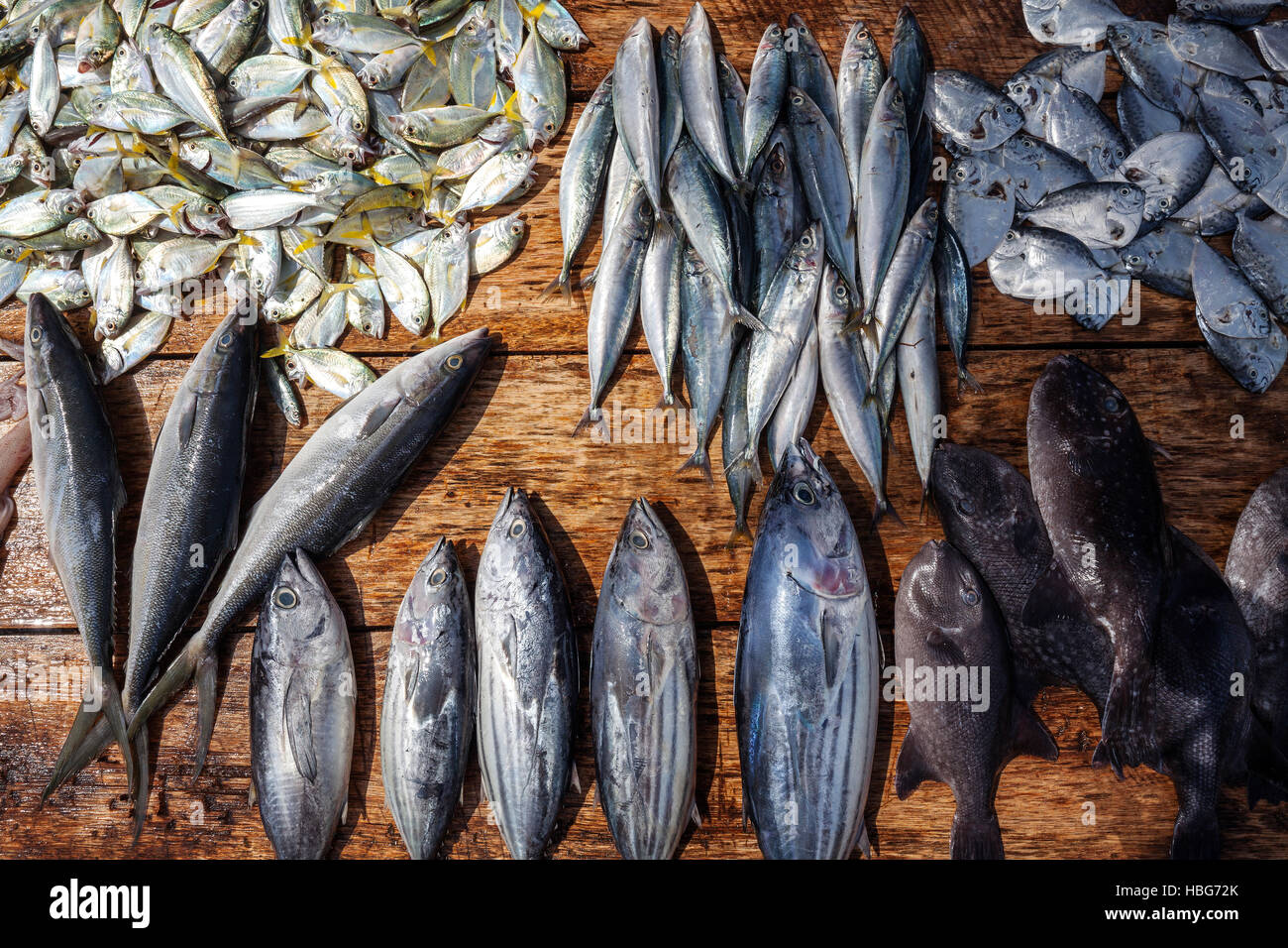 Fresh fish on table for sale weligama southern province for Stock fish for sale