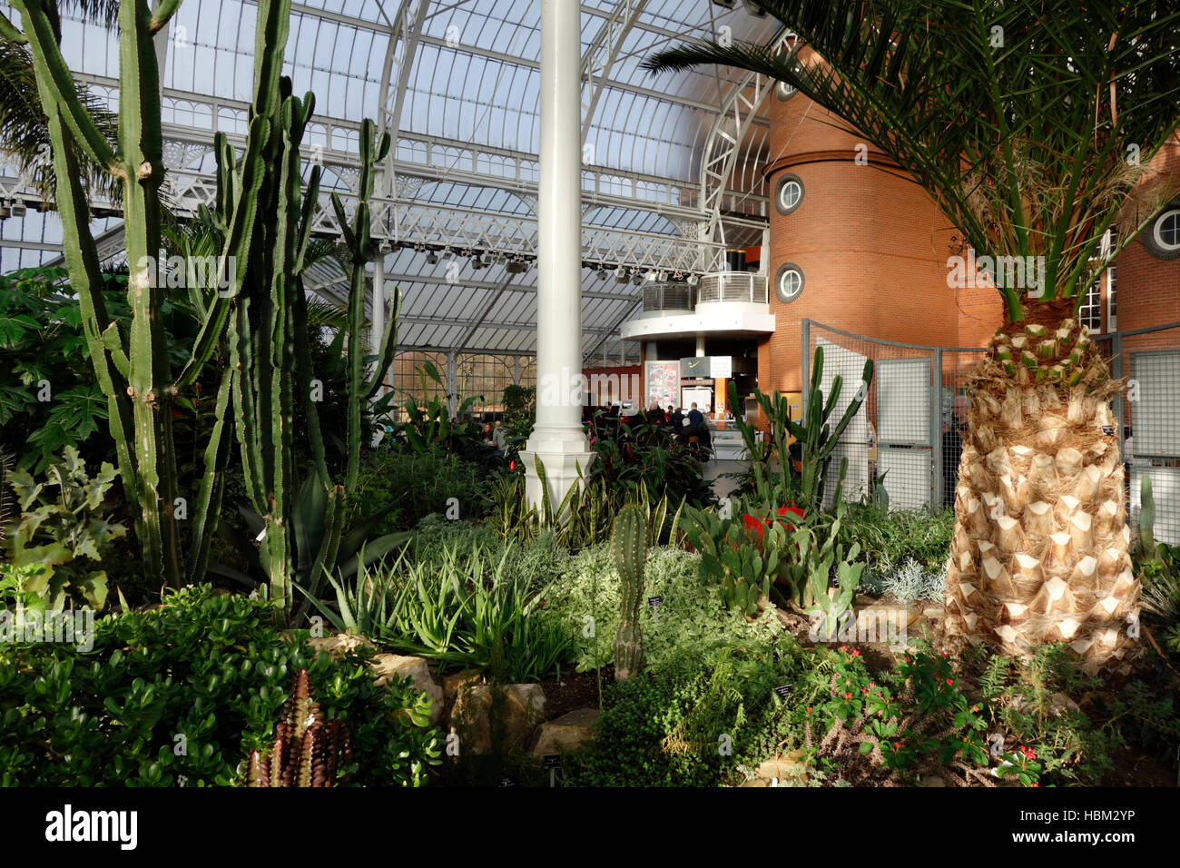 the interior of the winter gardens at the people u0027s palace glasgow