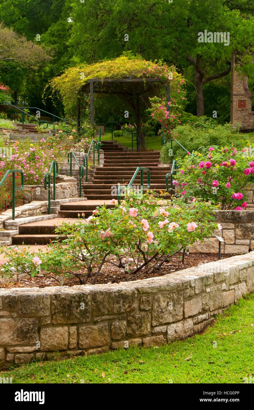 Rose Garden, Zilker Botanical Garden, Austin, Texas