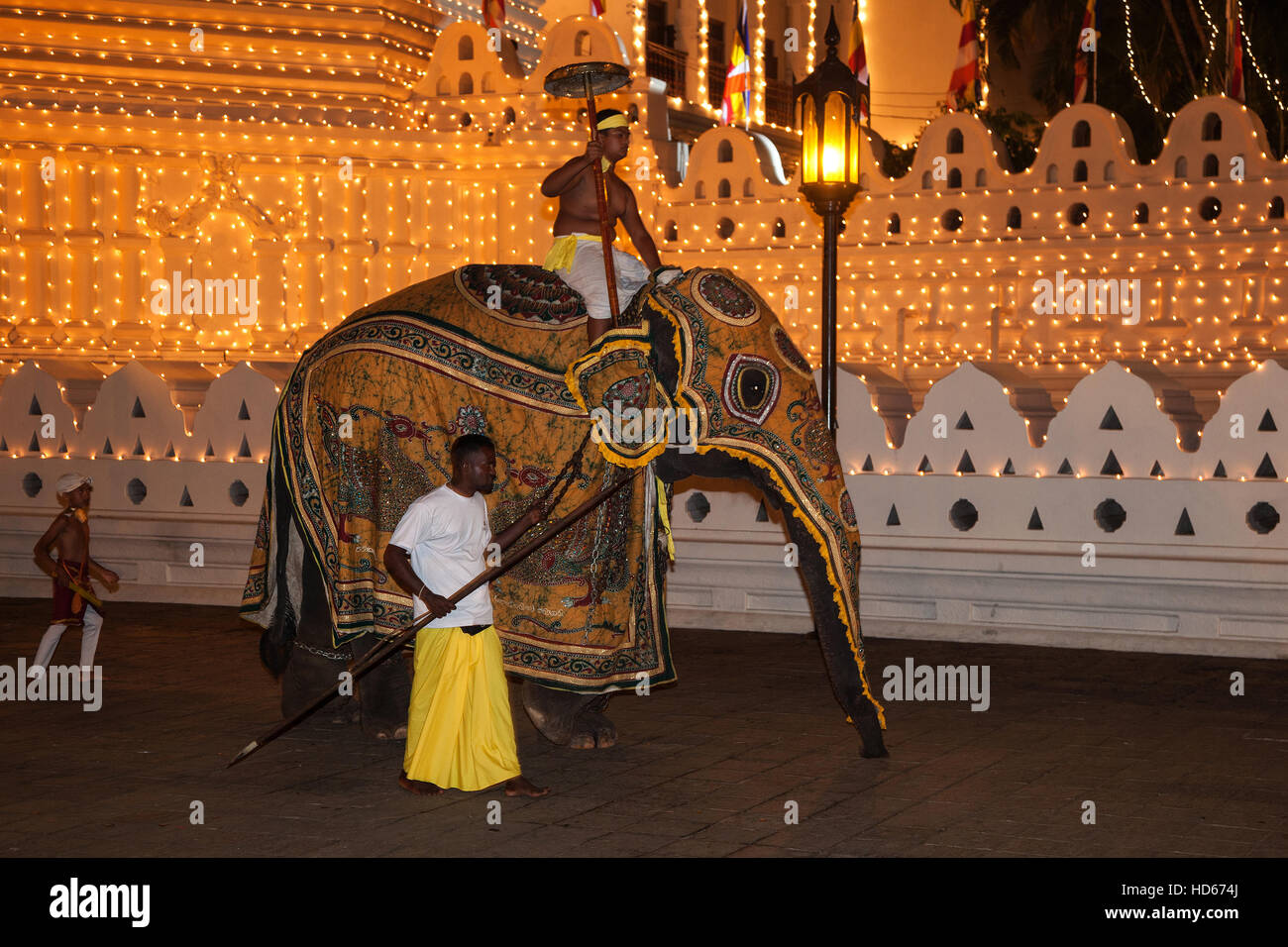 Decorated elephant, Buddhist festival Esala Perahera, in ...