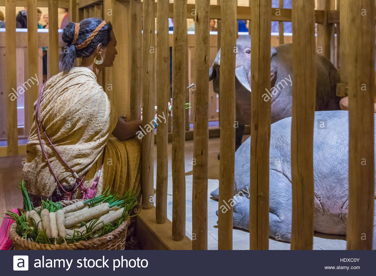 Feeding animals inside noah 39 s ark at the ark encounter in for Noah s ark kentucky location