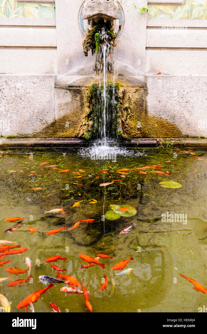 Goldfish in a pond in a formal garden with a water for Formal koi pond