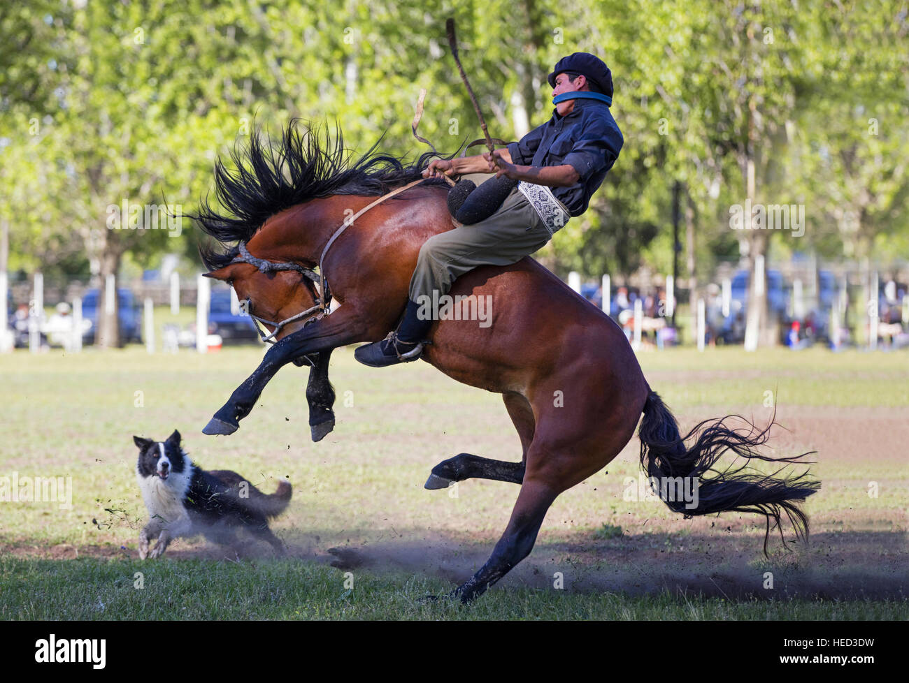 Las Flores Argentina St Dec A Horse Taming One Of The - Argentina traditions