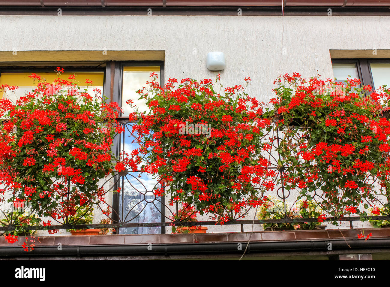 100 balcony flowers shop window boxes planter boxes for Balcony flowers