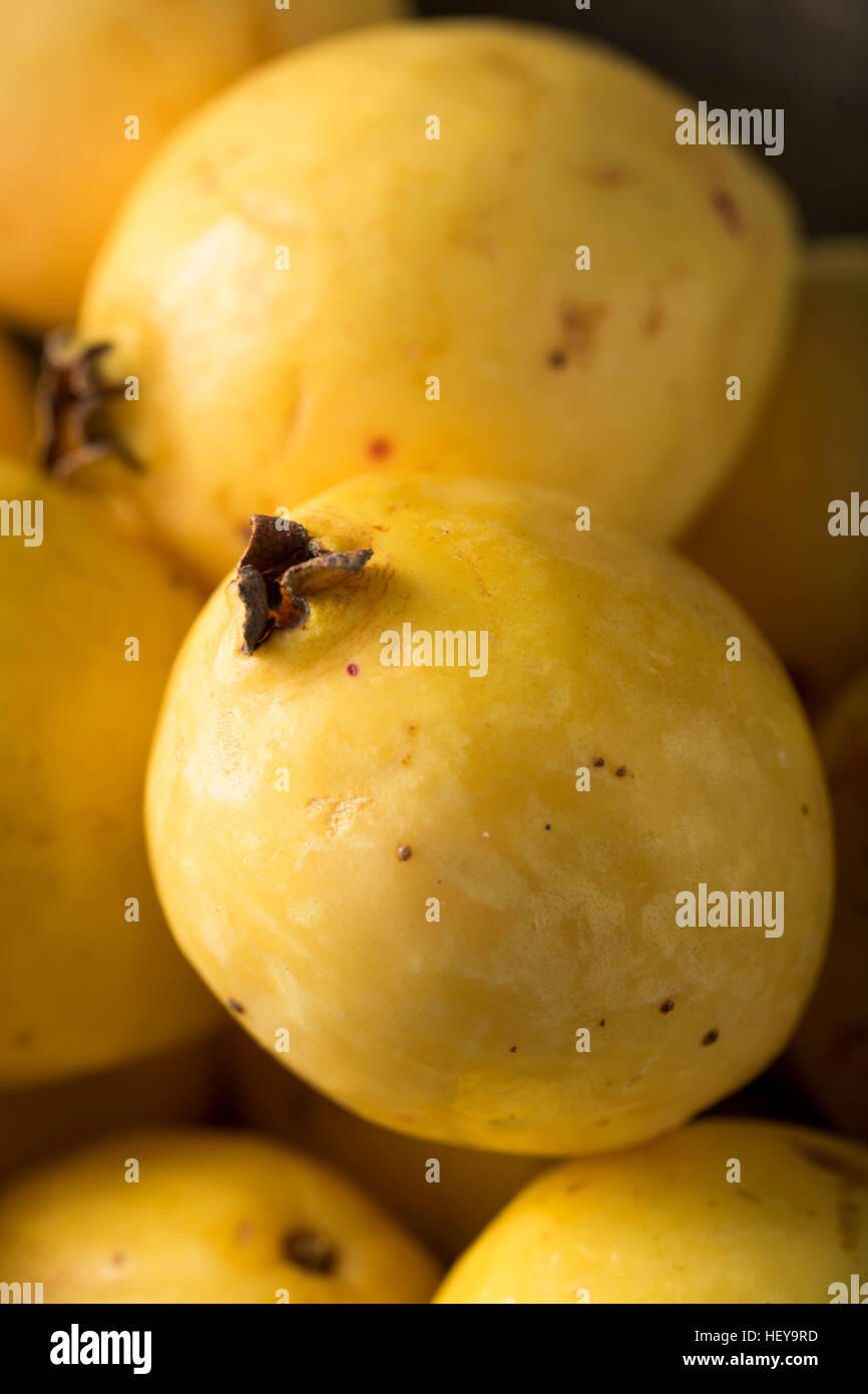 Rawanic Yellow Guava Fruit Ready To Eat