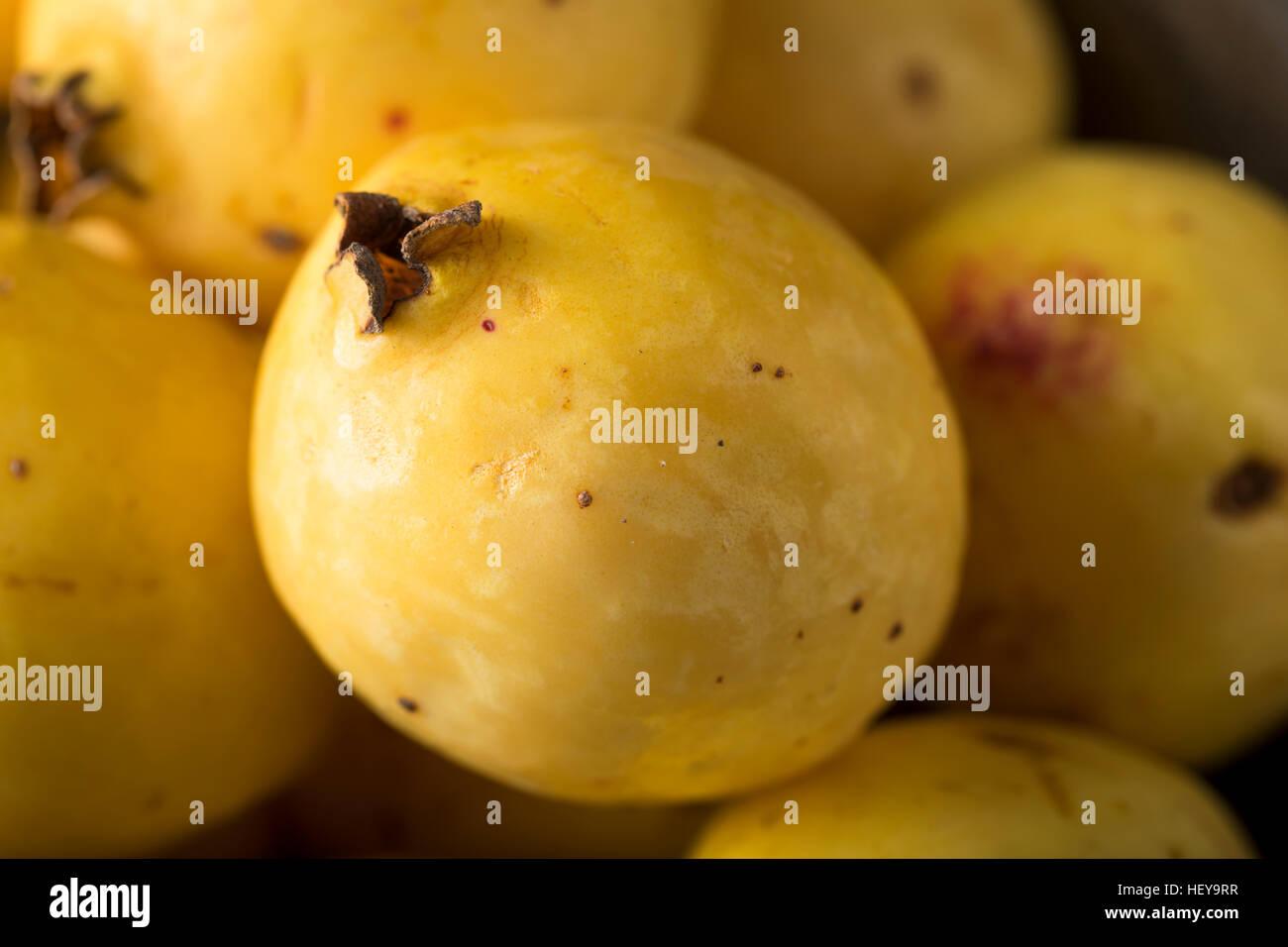 Rawanic Yellow Guava Fruit Ready To Eat